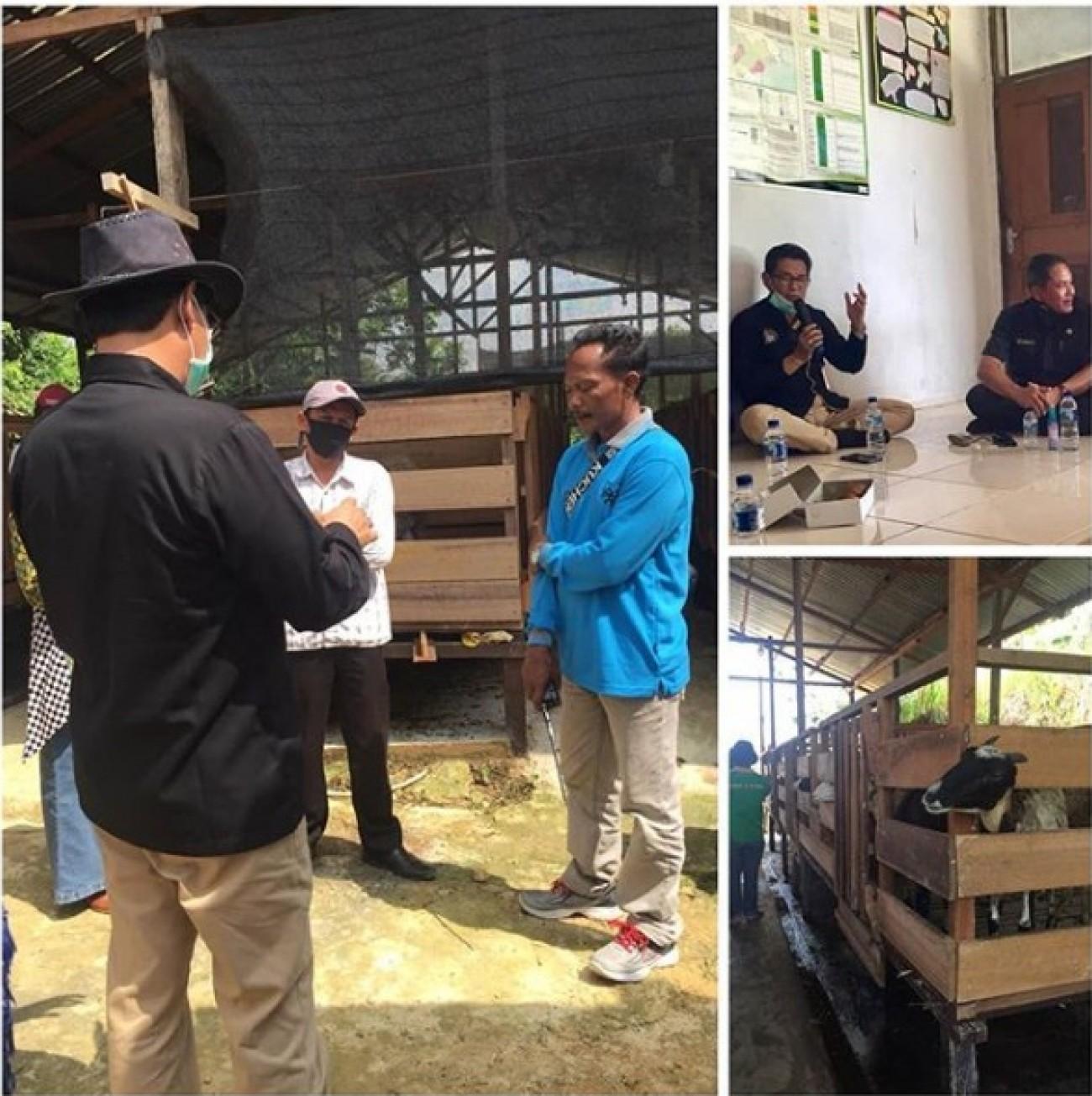 Sapi Bali di Kaltim Rentan MCF