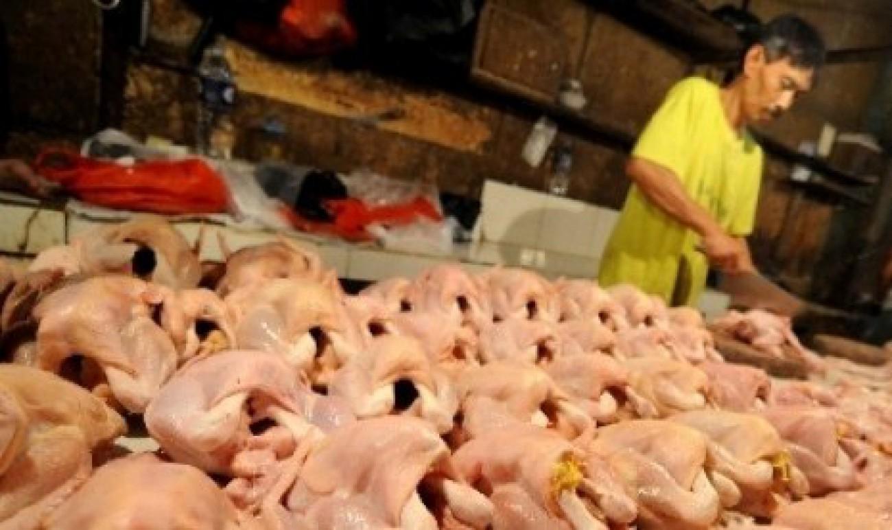 Konsumsi Daging Ayam Capai 55.269 Ton