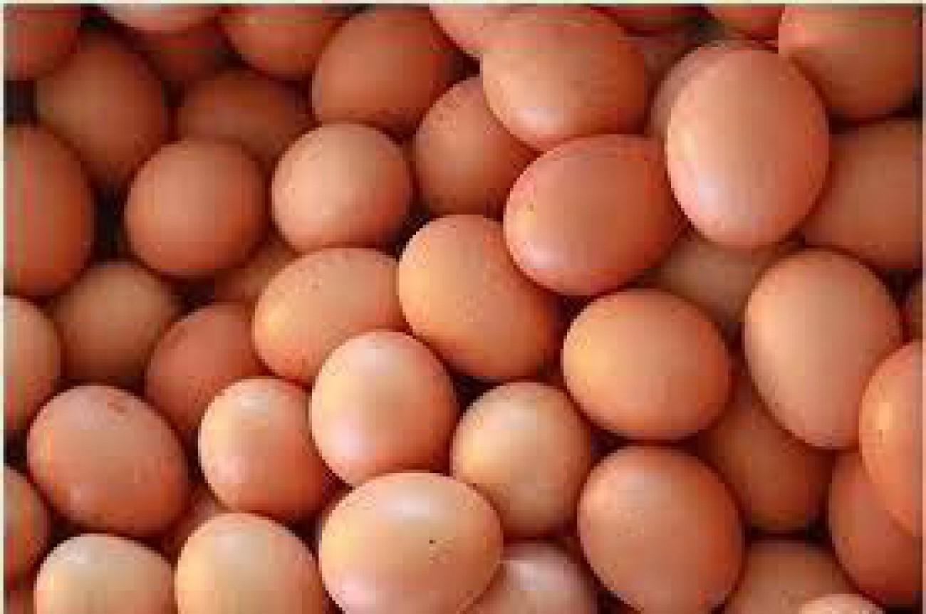 Telur Kaltim Terbanyak Dari Kukar