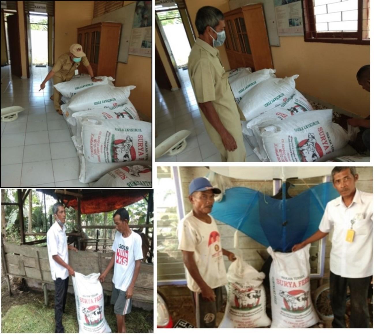 Dinas PKH Kaltim Distribusikan 25 Ton Konsentrat Untuk Kelompok Ternak di 4 Kabupaten/Kota.