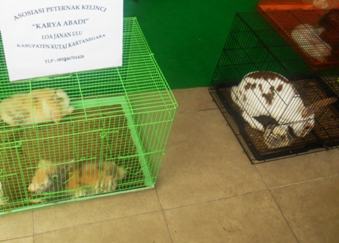 Peternak di Samarinda Dibantu Kembangkan Kelinci