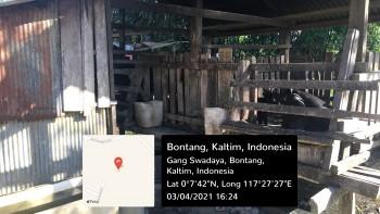 Pengawasan dan Profiling Peternakan Babi