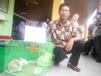 Samarinda Kembangkan Kelinci