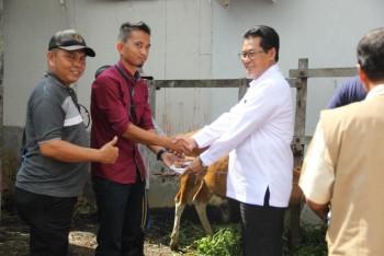 Penyerahan Bantuan Sapi Komitmen Perusahaan Tahap 1 di Kaltim